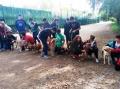 Alumnes de l'Escola Immaculada Concepció de Lloret visiten el Centre d'Acollida d'Animals de la Selva